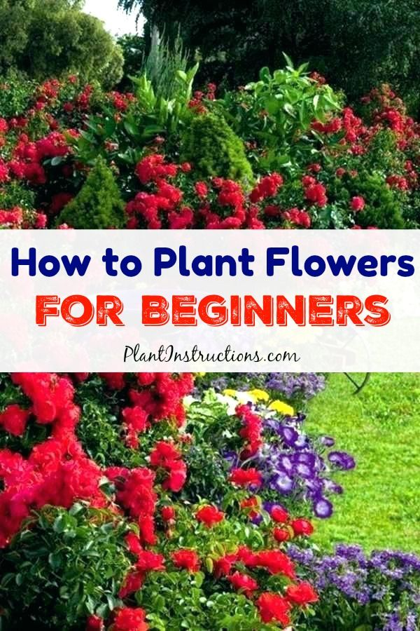 How To Plant Flowers For Beginners Planting Flowers 400 x 300