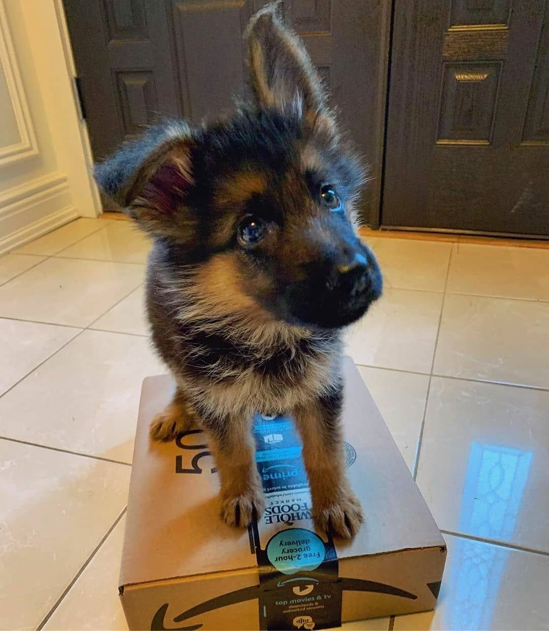 German Shepherd Puppies In 2020 German Shepherd Puppy