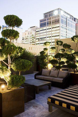 Prachtig als je een tuin op je dak hebt in de grote stad. Kijk hoe prachtig het uitzicht is dat je dan hebt.