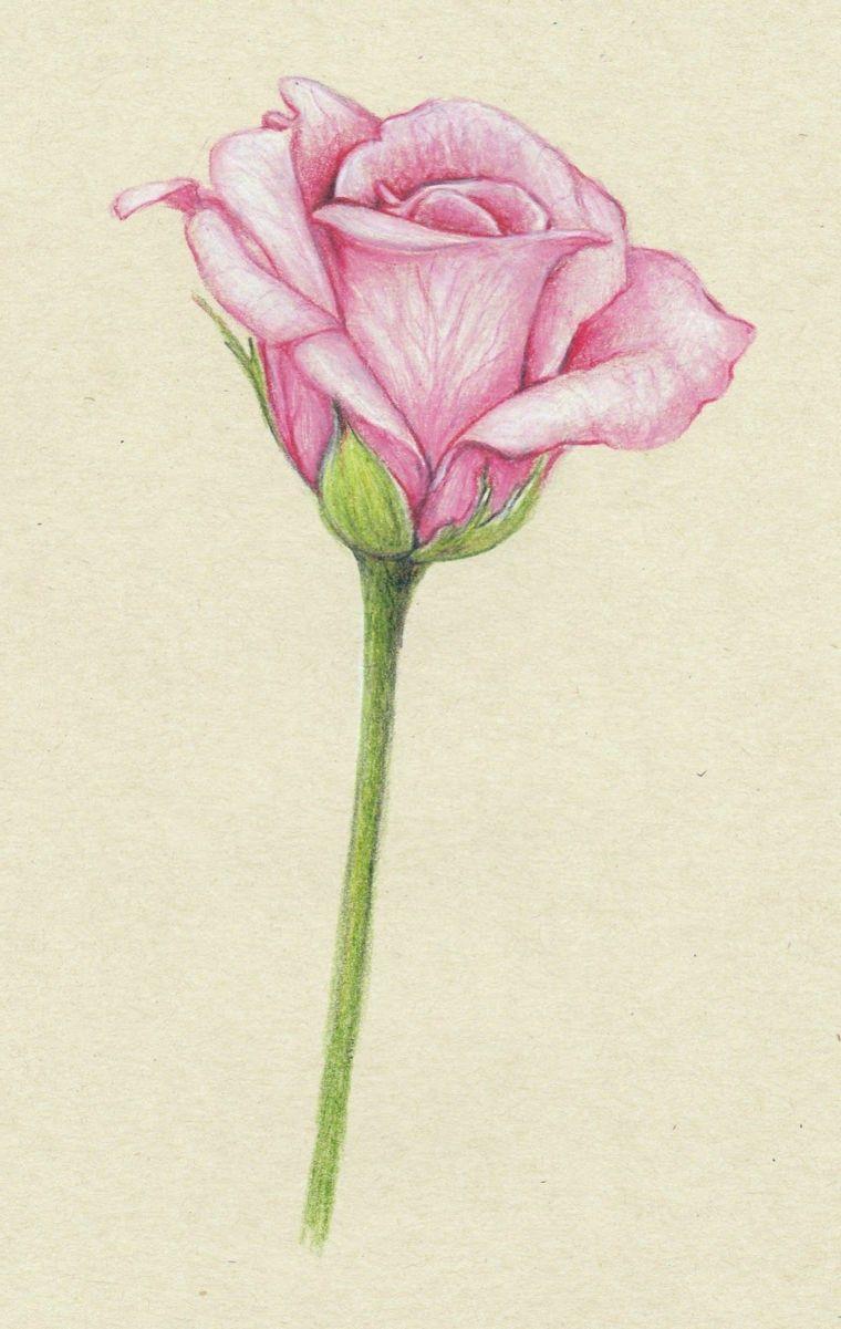 Foglio Bianco Ruvido Disegno Di Una Rosa Petali Di Colore Rosa Disegni Tumblr Facili Disegni A Matita Colorate Fiori Disegnati A Matita Disegni Di Rose