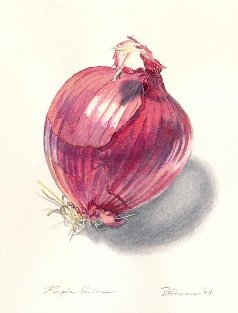 Purple Onion.....great shading | Watercolors | Pinterest ...