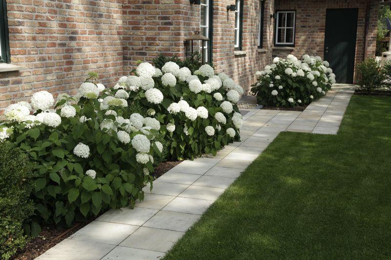 die große gruppe der hortensien eröffnet dem gartengestalter viele, Garten ideen
