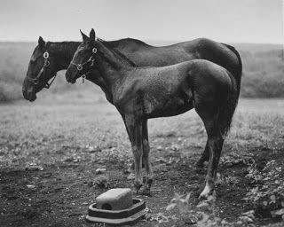 LYLYBYE: EMMET GOWIN - 1965.1973 - PHOTOGRAPHER