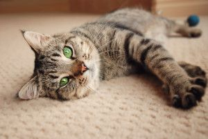 6 Tips For Introducing A New Cat To Your Existing Cat In 2020 Introducing A New Cat Cute Puppies Cat Purr