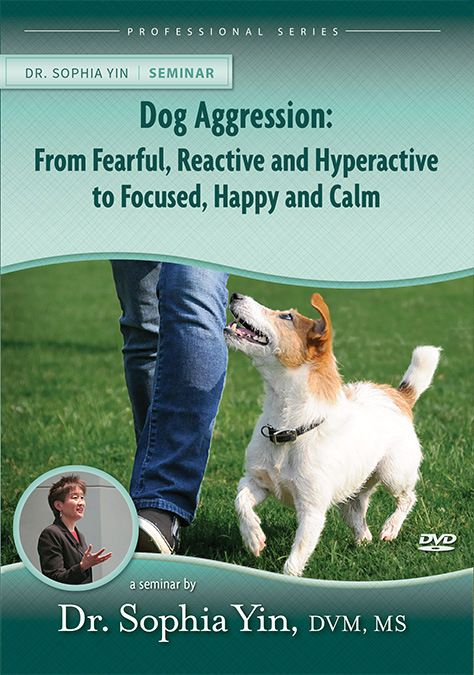 House Training A Puppy For Dummies And Clicker Training Your Dog