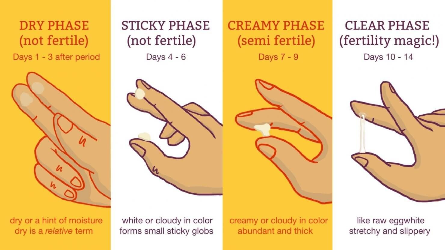 Cervical Mucus Chart Know When You Re Fertile