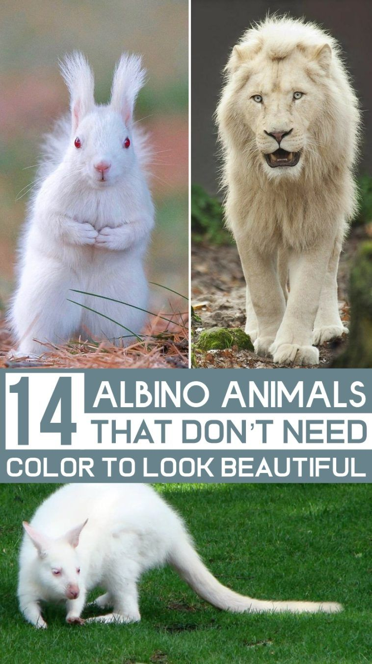 Photo of 14 Albino Animals That Don't Need Color To Look Beautiful