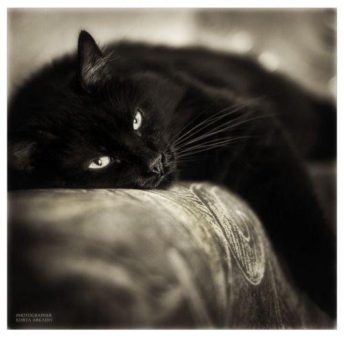 Arkadyi Kurta S Cat Obsession Cats And Kittens Cool Cats