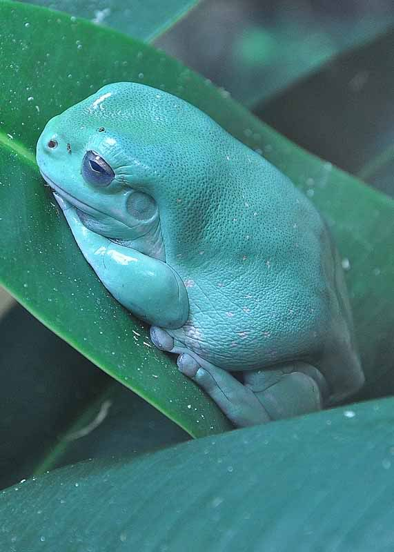Weird Happening In My Bathroom Page 1 Frog Species Frog Animals