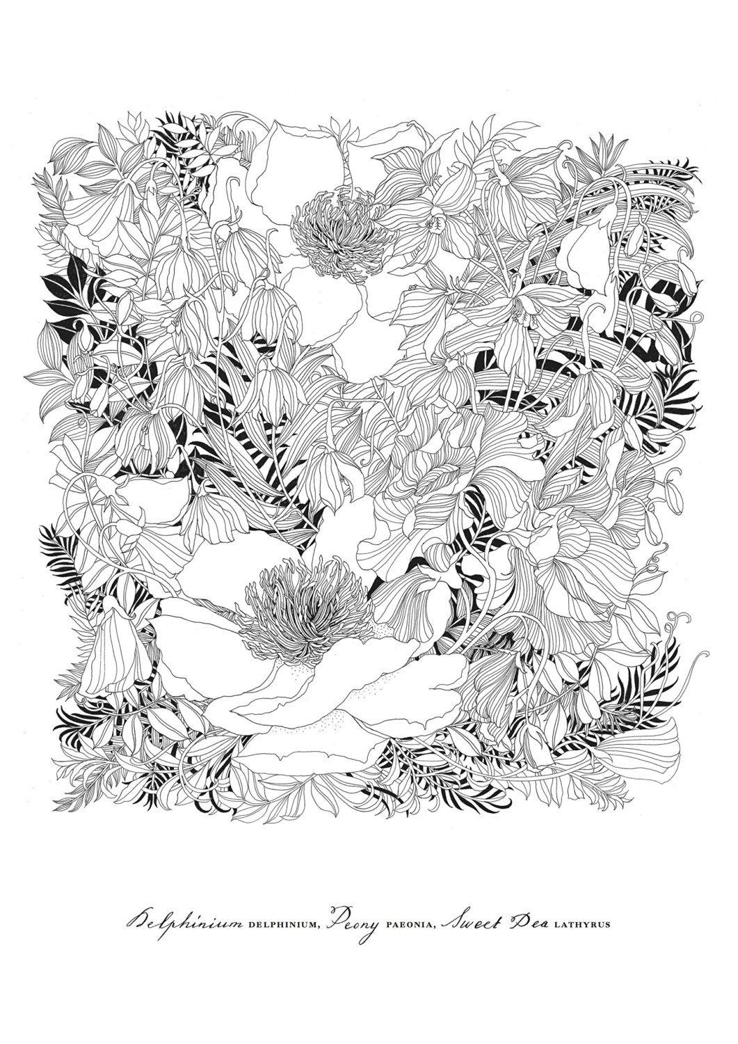 Floribunda A Flower Coloring Book By Leila Duly World S Etsy In 2020 Coloring Books Coloring Pages Flower Drawing