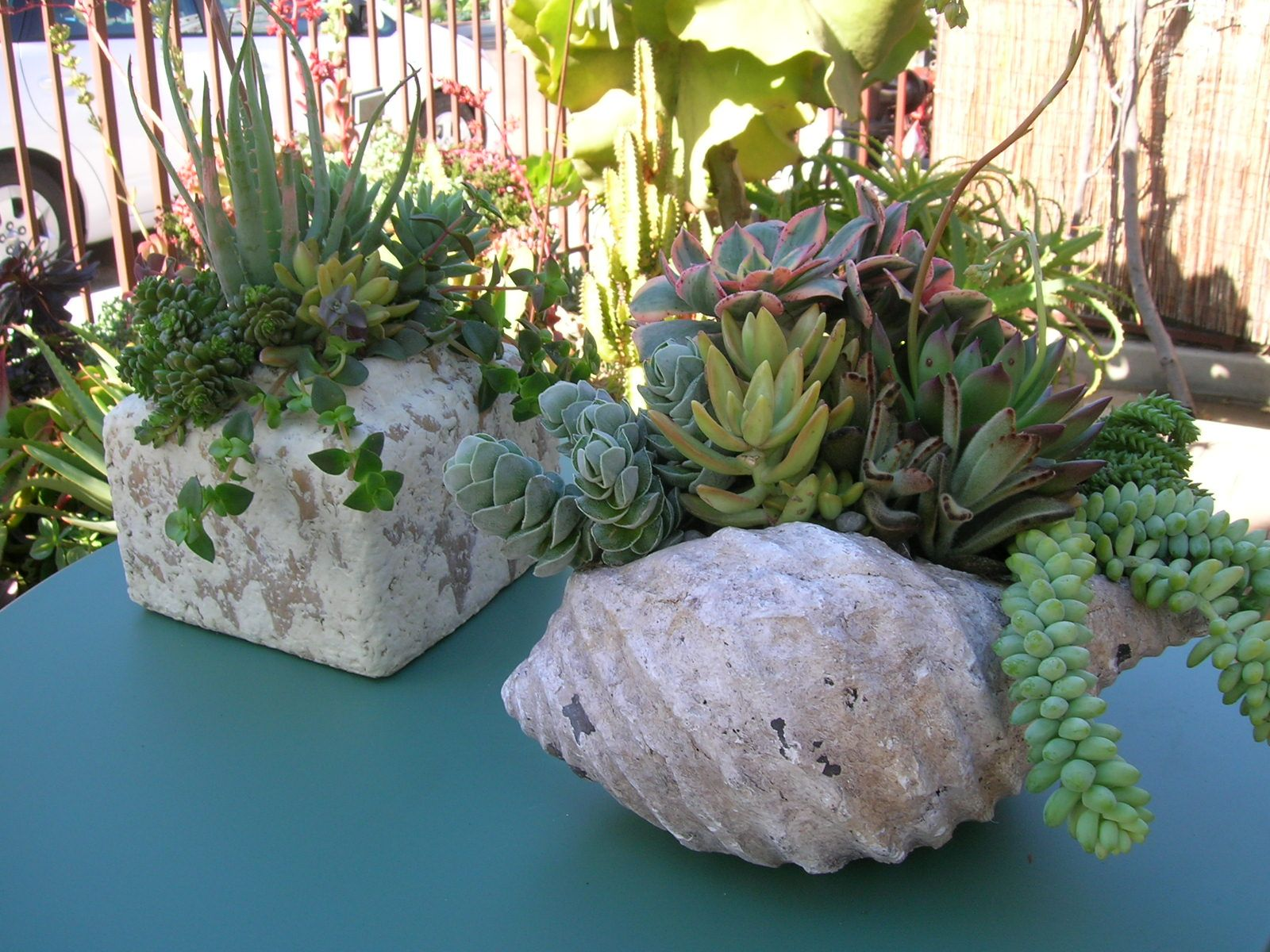 Great Containers For The Pretty Plants. Succulent ContainersSucculents ...