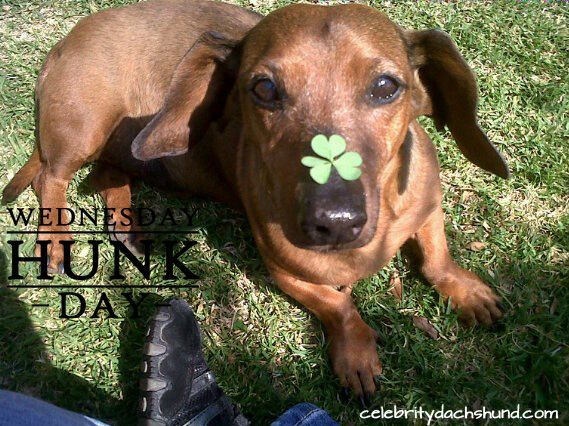 Today S Wednesday Hunk Is Worsie From Gauteng South Africa