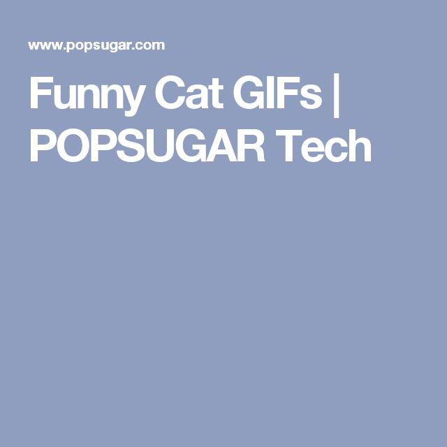 Funny Cat GIFs | POPSUGAR Tech