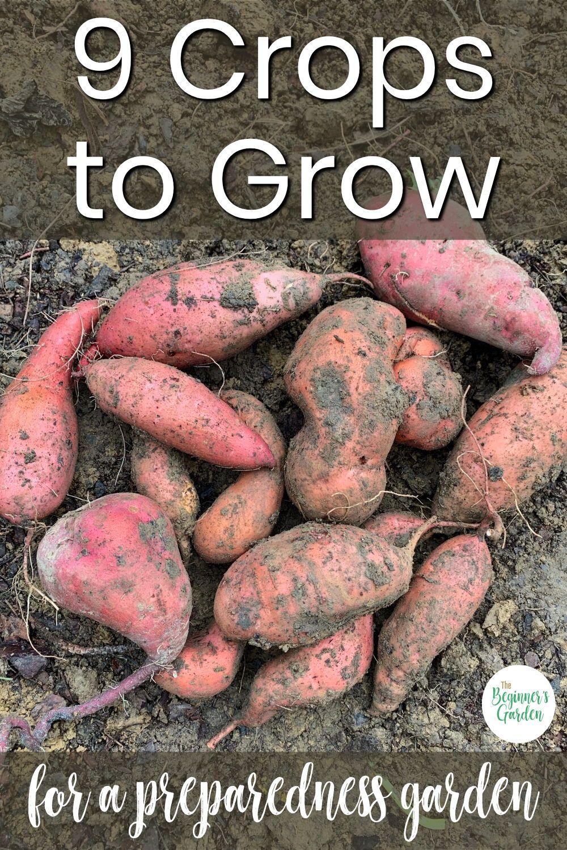 9 crops to grow in a crisis home vegetable garden