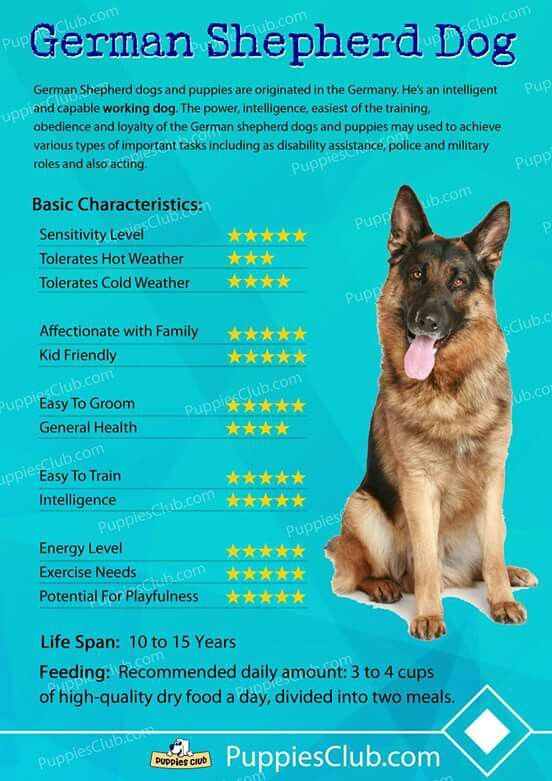 Gsd Characteristics Dog Training Dog Training Tips Easiest