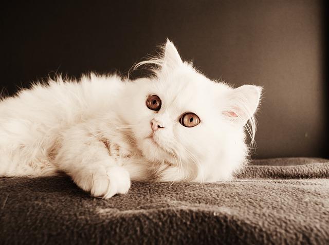 ข นตอนการอาบน ำแมว ต องเตร ยมความพร อมอะไรบ าง Persian Cat Animals Pets Cats