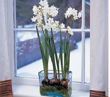 Paperwhites my favorite flower for winter and early spring weddings my favorite flower for winter and early spring weddings mightylinksfo Images