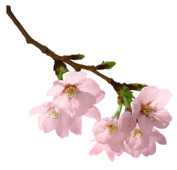 Spring Branch PNG Picture   Imágenes flores   Pinterest ...