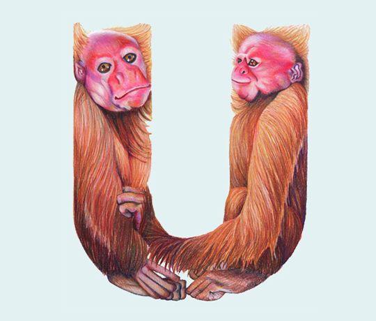 Animals in Alphabet - mashKULTURE