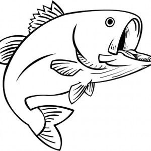 Guadalupe Bass Fish Coloring Pages Guadalupe Bass Fish Coloring