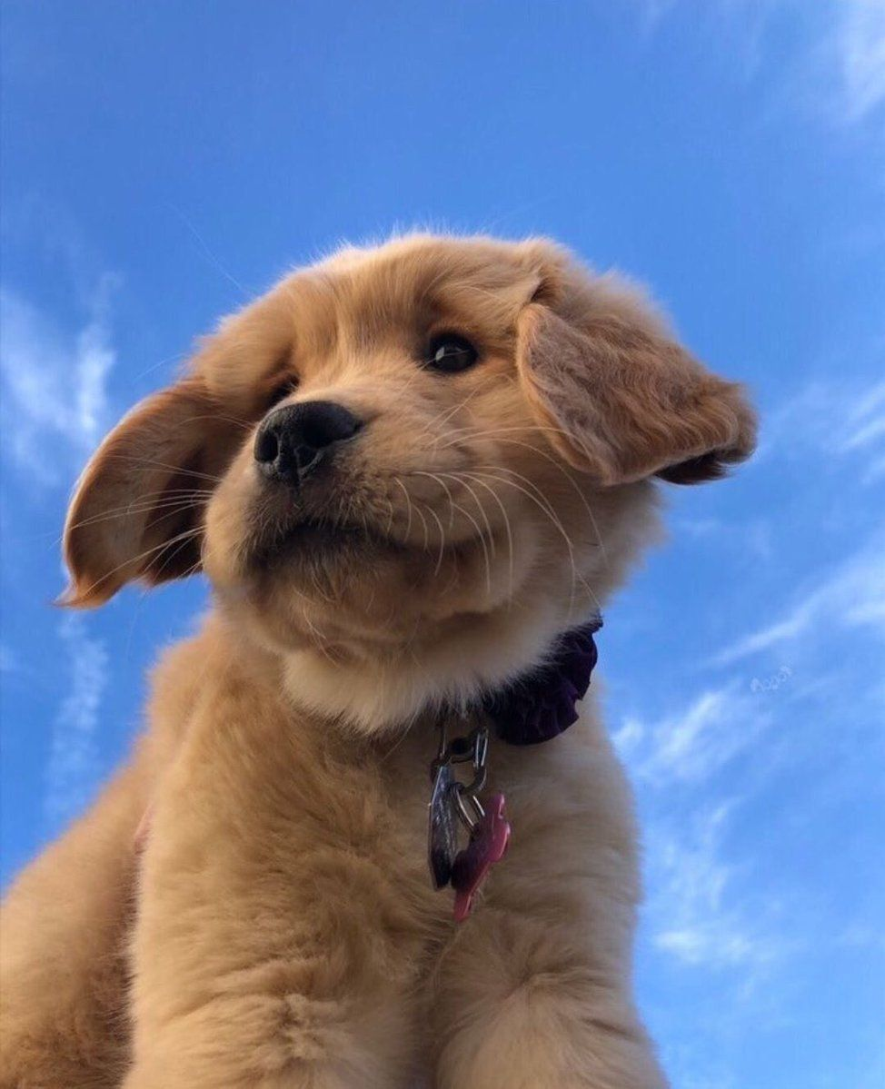 On Twitter Cute Animals Cute Baby Dogs Puppies