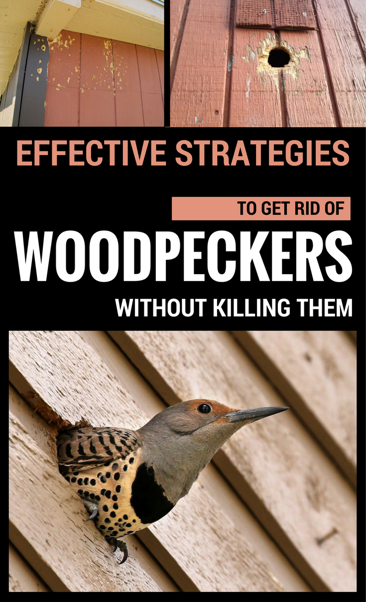 how to get rid of woodpeckers in trees