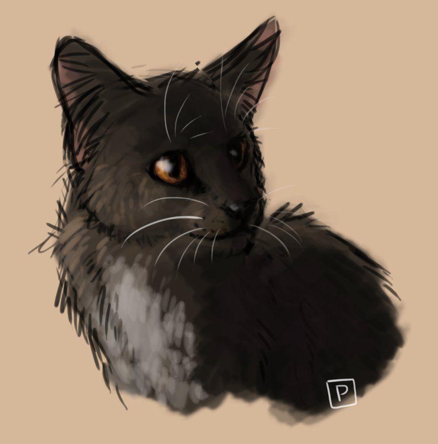 Ravenpaw by Cat-Patrisiya.deviantart.com on @DeviantArt