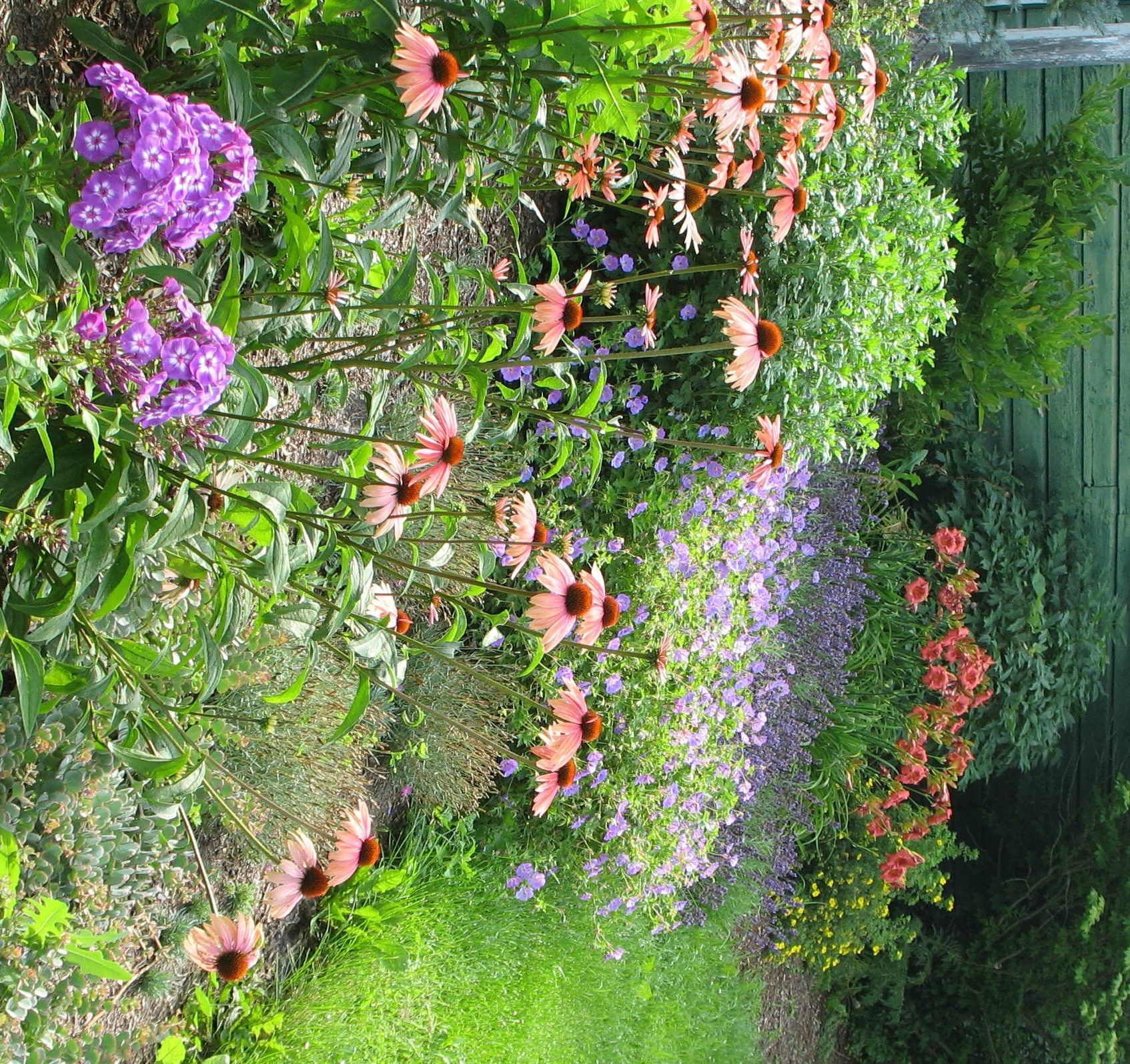 perennial garden ideas taming the weedy monster how to renovate a perennial bed