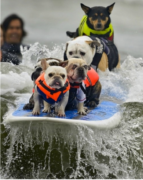 Pin By 2 Stand Up Guys Paddle Board L On Sup Dogs Animals Dog Competitions Baby Dogs