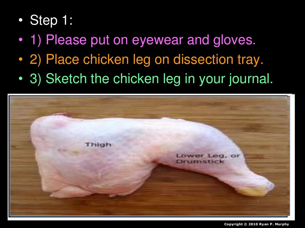 Chicken Leg Dissection Powerpoint Muscular System Skeletal System