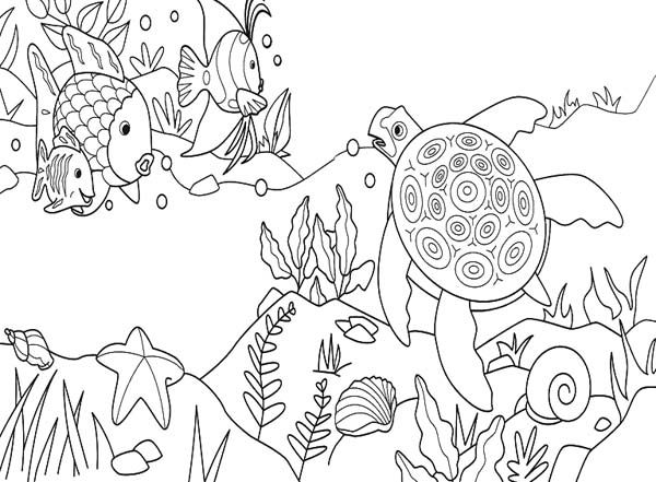 Sea Turtle Under the Sea Coloring Pages - Enjoy Coloring Ocean - best of under the sea coral coloring pages