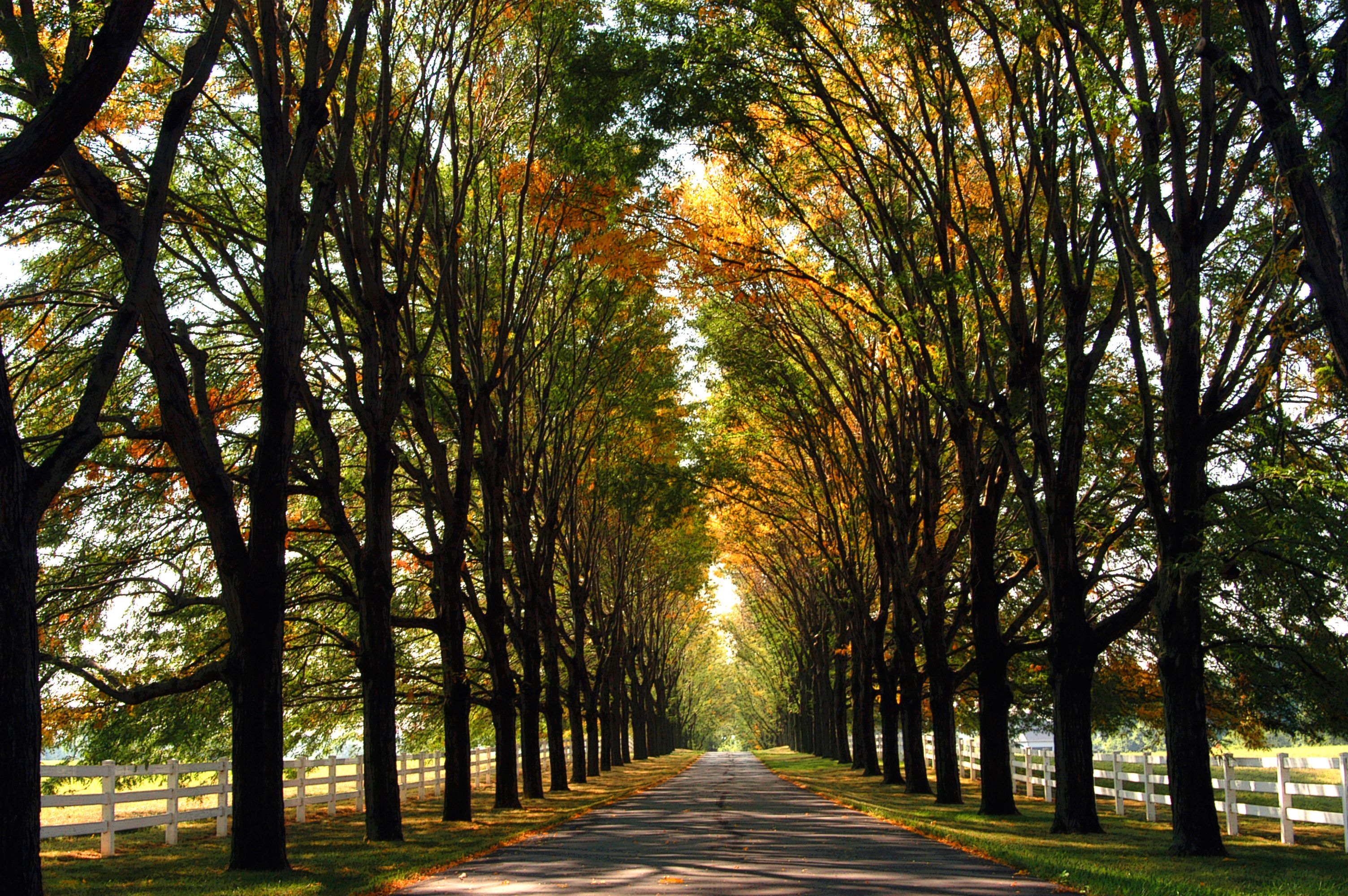 My Dream Driveway Not So Long But The Trees Lining It With White Fence Along The Sides Beautiful Driveways Long Driveways Driveway Border
