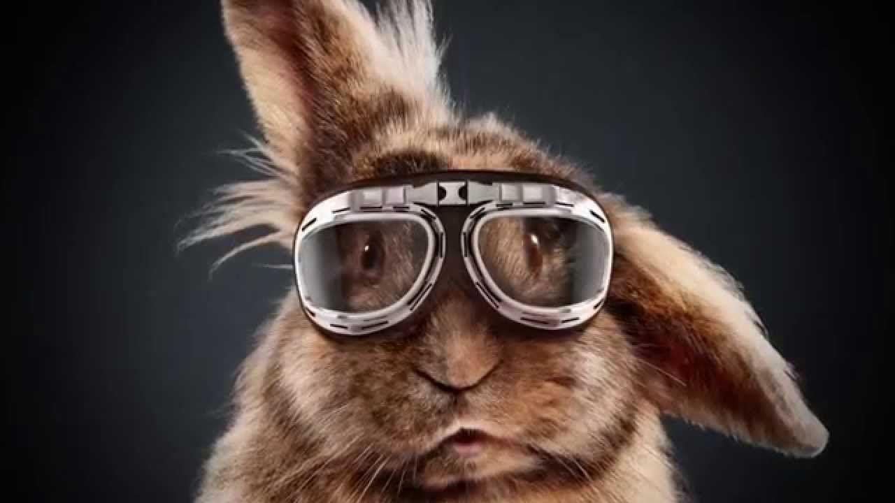 Media Markt Easter 2015 The Rabbit Race Cannes Lions