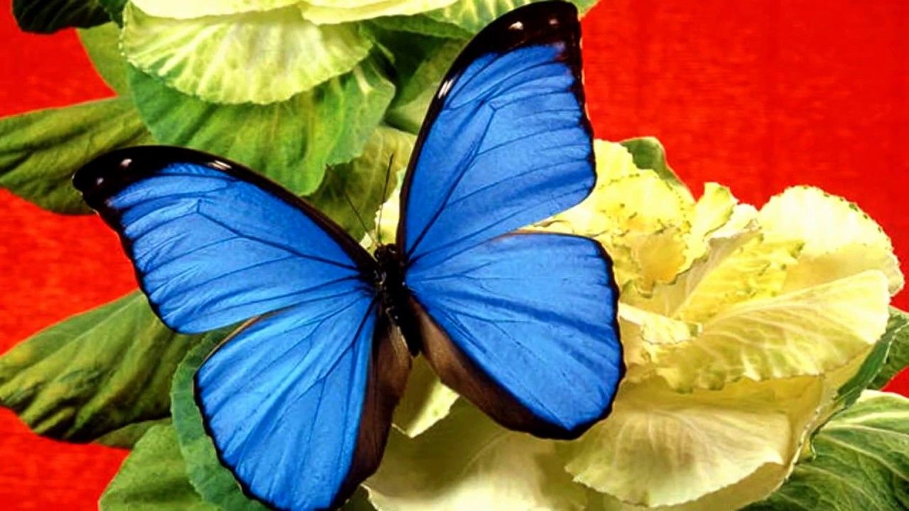 Various butterflies and Colorful flowers (HD1080p) #blueflowerwallpaper