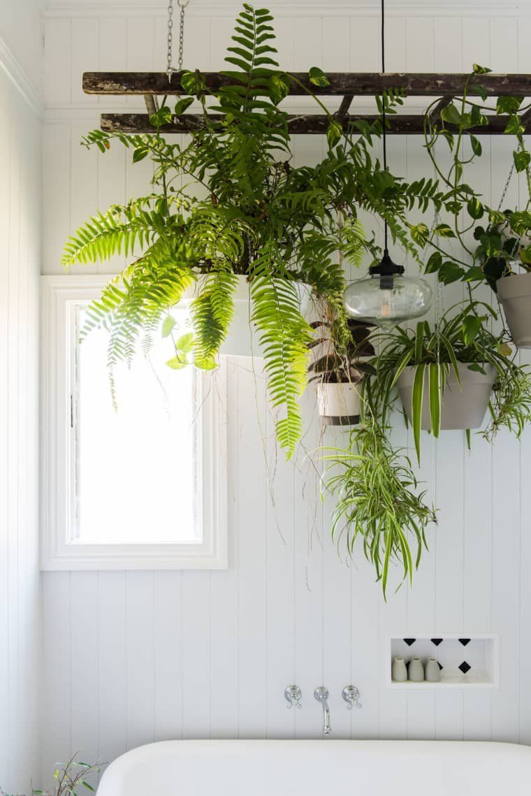 A Japanese Style Two Room Bath Filled With Hanging Plants Bathroom Plants Hanging Plants Indoor Bathroom Plants Decor