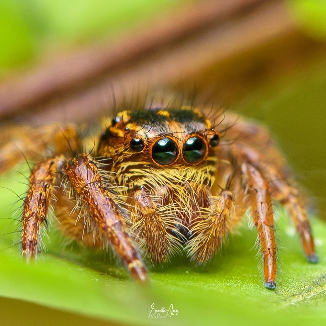 Cryptocurrency pictures of spiders psg vs montpellier betting preview