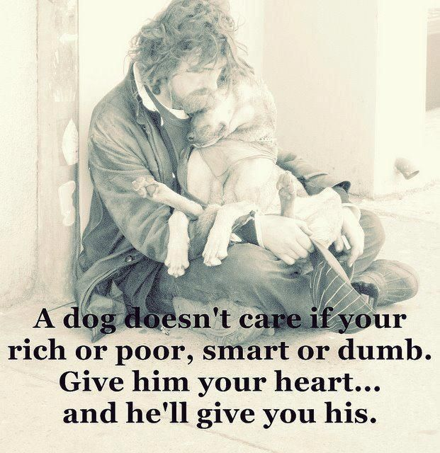A dog doesn't care if your rich or poor, smart or dumb. Give him your heart... and he'll give you his.