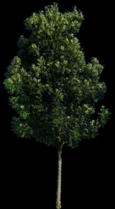 Tree 59 By Gd08 by gd08.deviantart.com on @deviantART