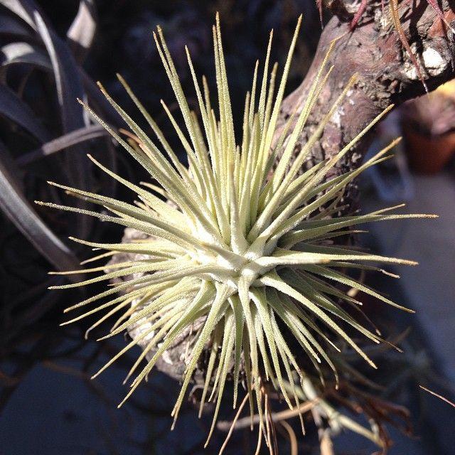 plantatopia's photo on Instagram