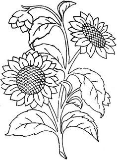 sunflower line art - Google Search