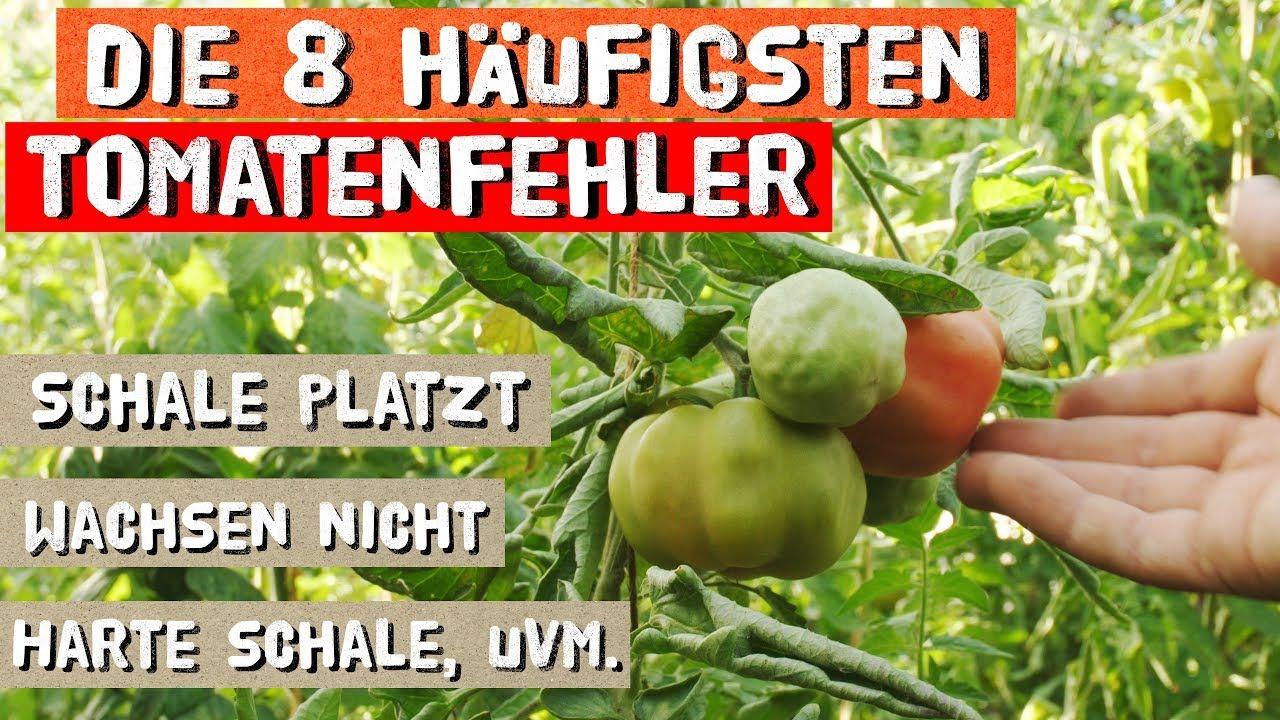 Die 8 Haufigsten Fehler Beim Tomatenanbau Youtube Tomatenanbau Anbau Tomaten