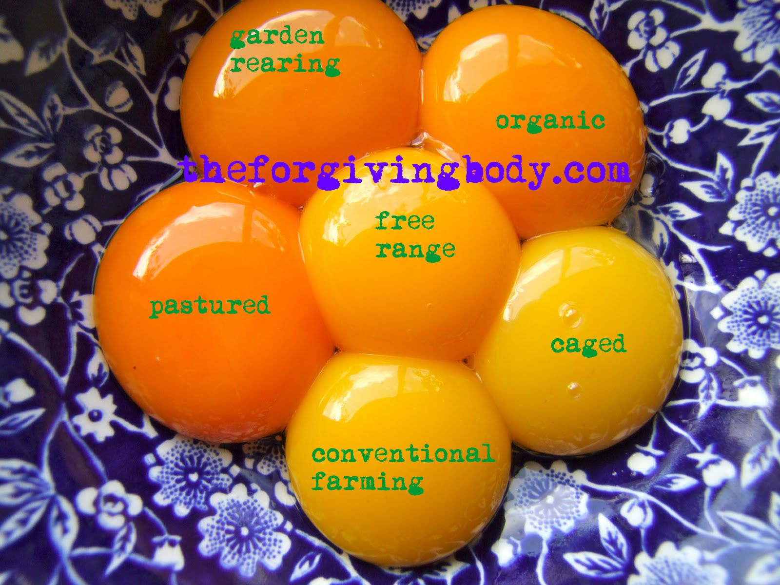 Free Range Vs Caged Eggs