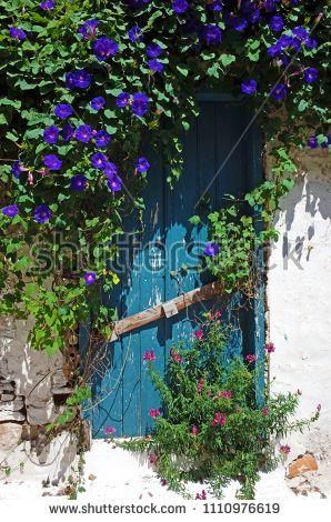 Old Blue Wooden Door Overgrown Bindweed Stock Photo (Edit No…