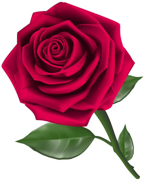 Steam Rose Clipart Png Image Rose Flower Png Rose Clipart Red Rose Png