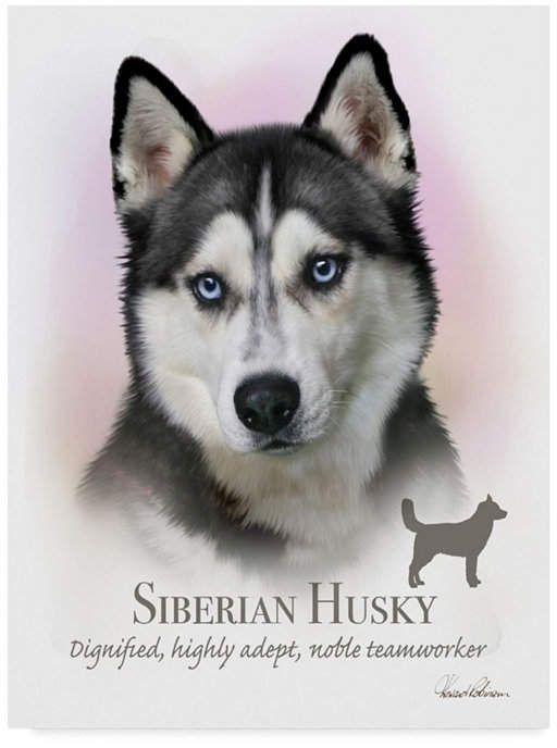 Trademark Global Howard Robinson Siberian Husky Canvas Art 14