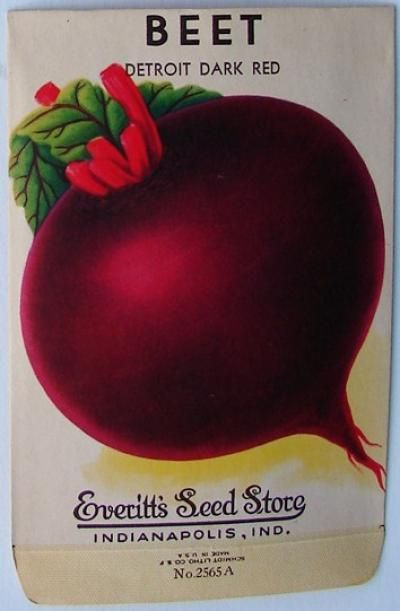Everitt S Seed Store Beet 2565 A Vintage Seed Packet Vintage Seed Packets Seed Packets Vegetable Seeds Packets