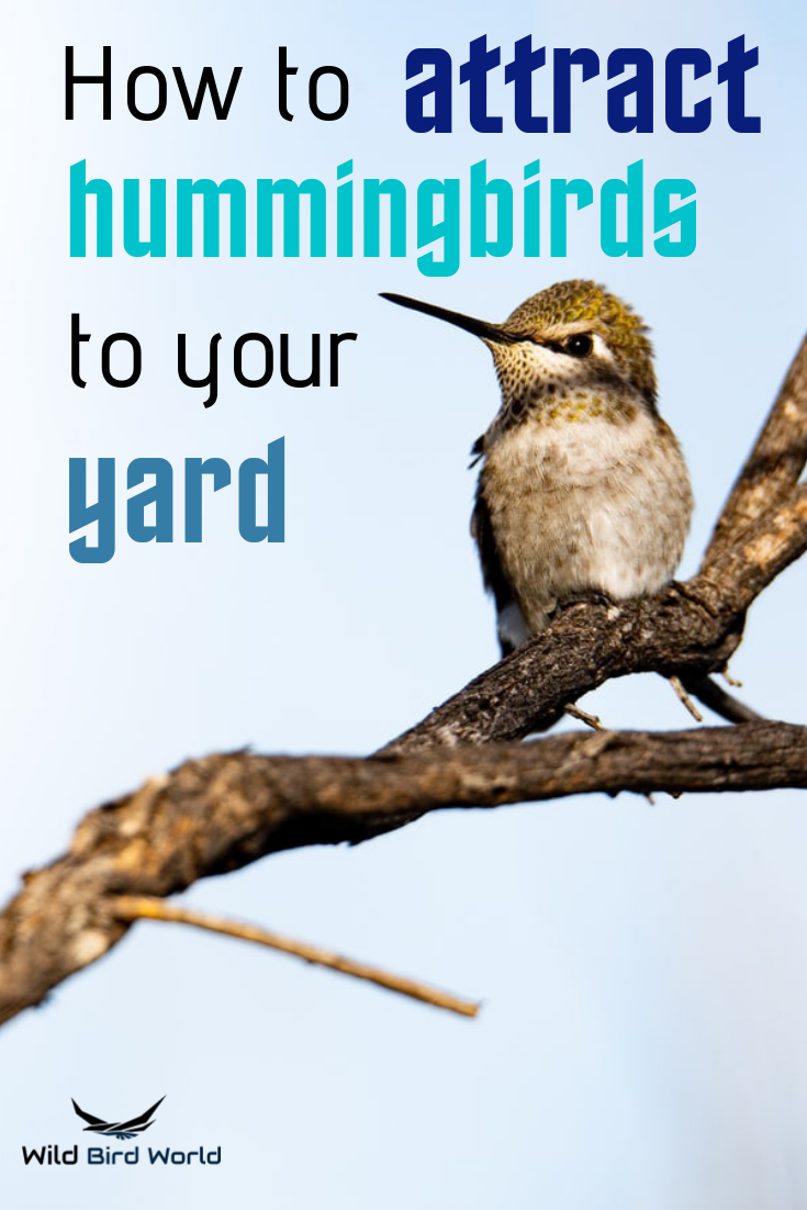 How To Attract Hummingbirds To Your Yard How To Attract Hummingbirds Humming Bird Feeders Hummingbird