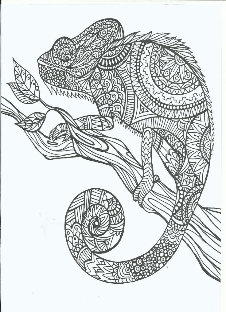 Coloring Page World: Chameleon (Portrait)/ visit this site & there ...
