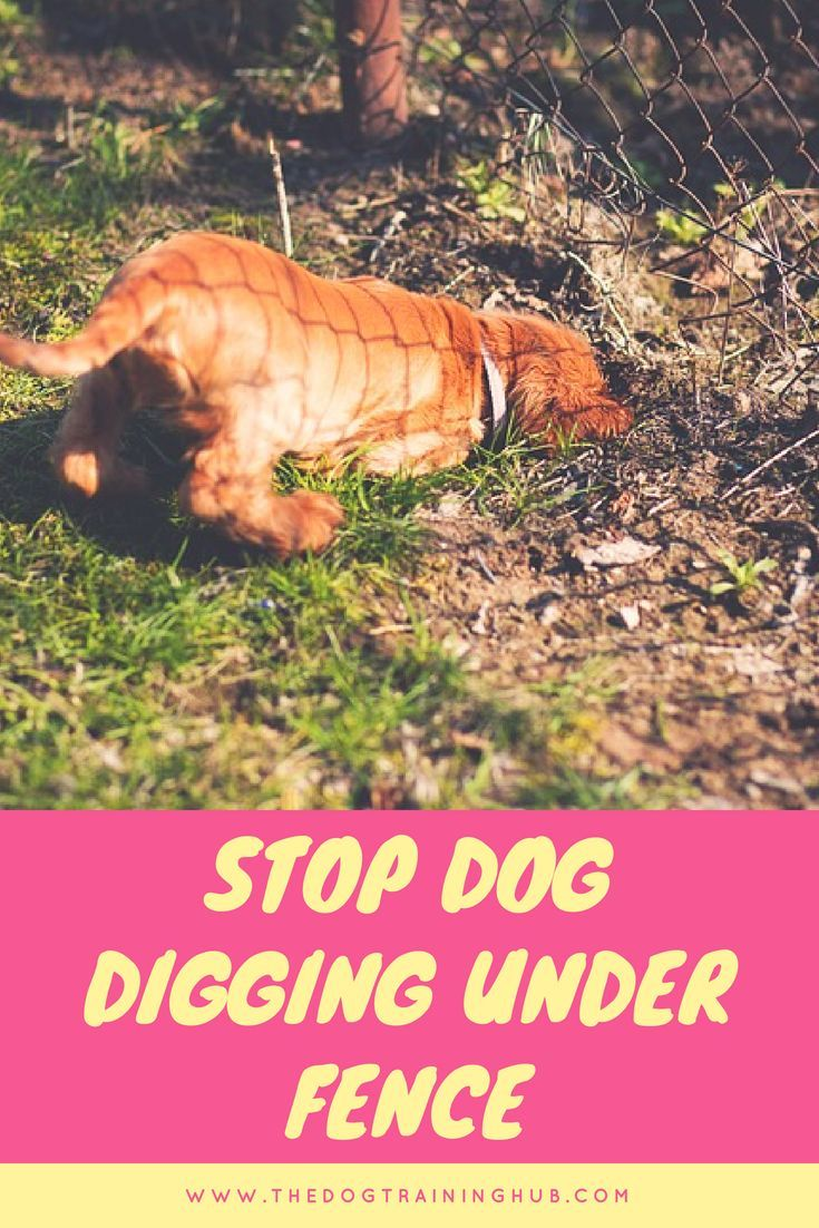 best way to stop a dog from digging under a fence