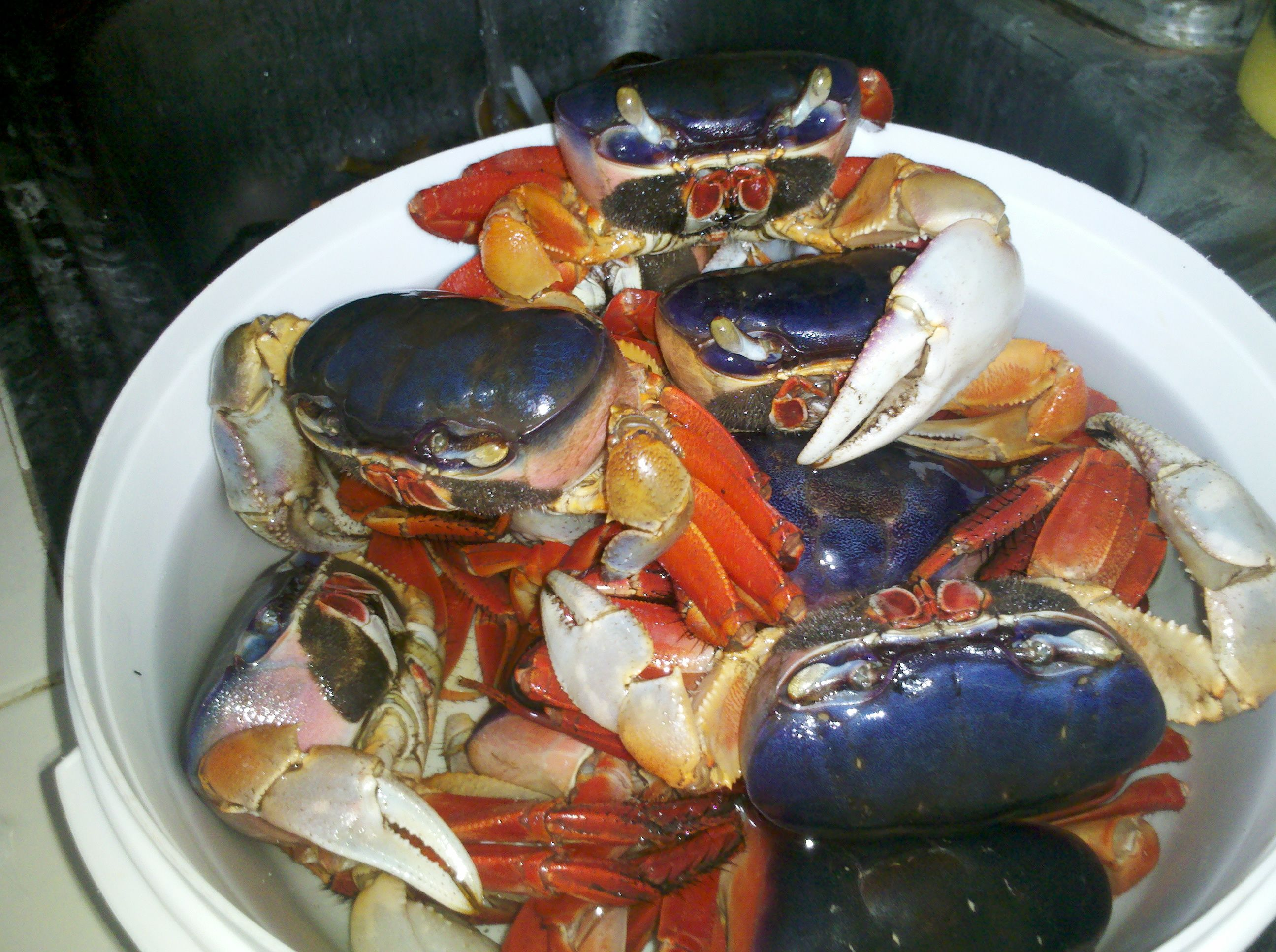 cangrejos azules #yummy #crab | Nature from El Salvador | Pinterest